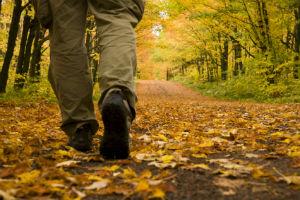 Passi nelle foglie